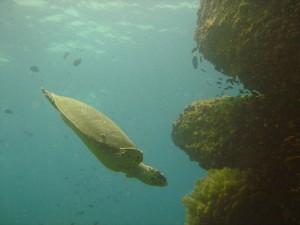Les fonds marins de Phuket