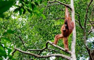 Les singes feront partie de votre voyage