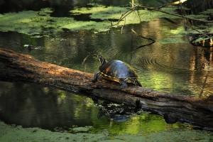 La nature en Floride